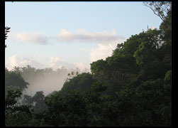 For those willing to experience Lachesis territory with our guidance, my house in Itacaré and the first advanced camp site in Serra Grande will be our base camps. Its a wonderfull vanishing world, and we ought to join forces to protect and preserve it. Please contact Rod Souza: lachesisbrasil@hotmail.com
